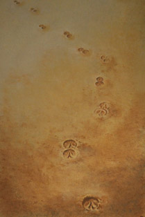 hoofprints_sand