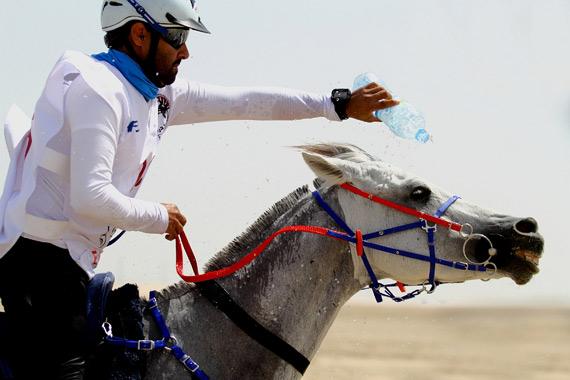 120km winner Jassim Mohammed Ali Al Meadadi and Shabbab.