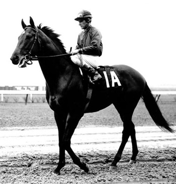 1968 Horse of the Year Dr Fager.
