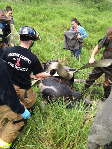 A sedated Missy recovers from her muddy ordeal. Photo: Marion County Fire District #1