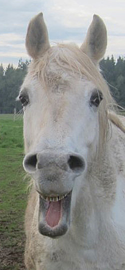 How confident can we be in our assessment that a horse is happy?