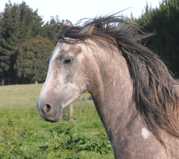 Mares who are normally well behaved can act up when their breeding (estrous) cycle occurs.