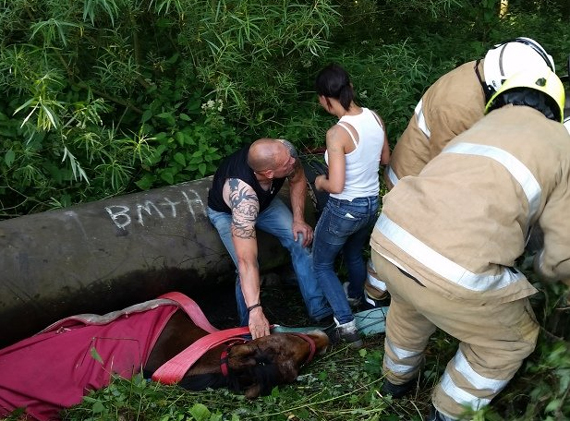 Rescuers worked to free Spencer from beneath a pipe in a Fife paddock. Photo: Scottish SPCA