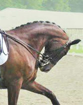 The researchers say that, regardless of the competition level, horses exhibited more conflict behaviours the more the head was kept behind the vertical.