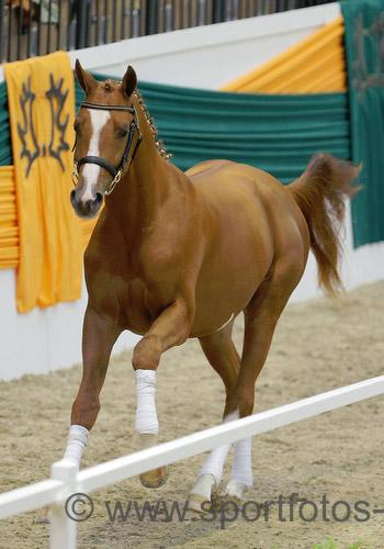 US bred stallion Davidas fetched €93,000.
