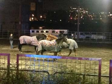 Three of the  freed horses before being returned to their stables. Photo: Portland Police Bureau