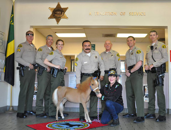 Handler Victoria Nodiff-Netanel with Valor and deputies from the Los Angeles County Sheriff's Department. Photo: Gentle Carousel Miniature Therapy Horses/Facebook
