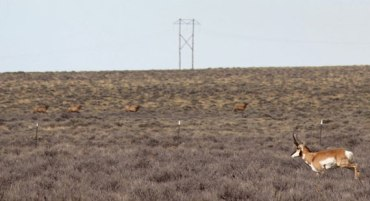 Pronghorn and elk in a sagebrush ecological site in southwestern Wyoming.
