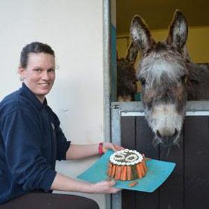 Th Birthday Cake Donkey