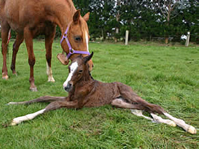 foal-newborn-featured