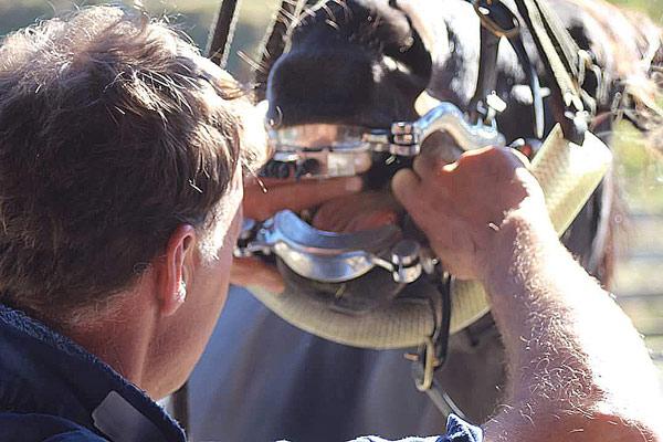 Dr Glenn Beeman, of New Zealand, examines a horse. Photo: Equinedentalvets.com