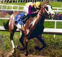 Tri Chrome, pictured in 1993.
