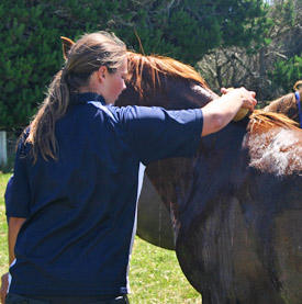 "Never use a blanket or ""cooler"" on a horse that is sweating. The best way to cool a horse quickly is to rinse the horse's body repeatedly with cold water and scrape off the excess water."