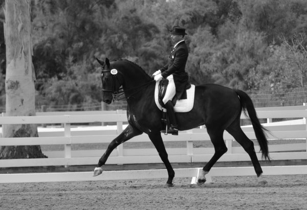 Steffen Peters and Folkstone, owned by Christina Vinios.