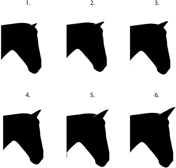 The six facial profile illustrations presented in random order to participants.