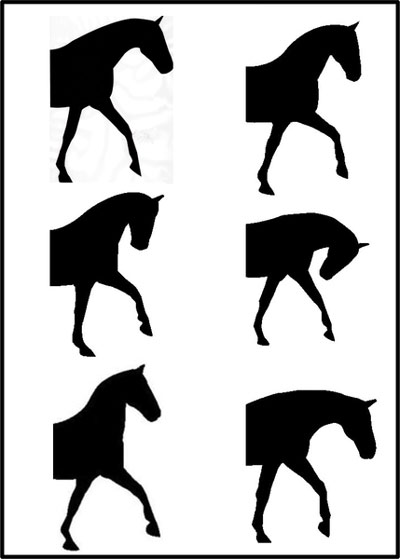 The six head-and-neck positions presented in random order to participants (A-E from left to right).