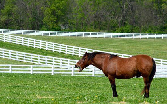 Paint it black' order for Kentucky Horse Park's iconic white fences