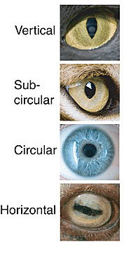 Different eye shapes.