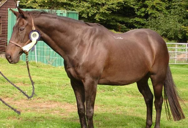 World Horse Welfare Wally's zany character won him the Funniest Anecdote award.