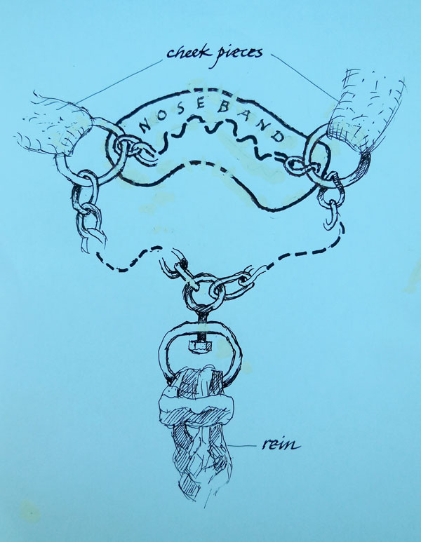 Dr Bob Cook's sketch of the authentic Kuwait Bedouin bitless bridle.