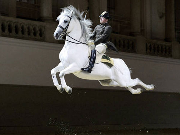 The classical horsemanship of the Spanish Riding School in Vienna now has official recognition as a cultural treasure from the UN agency Unesco. Photo: ASAblanca.com/René Van Bakel