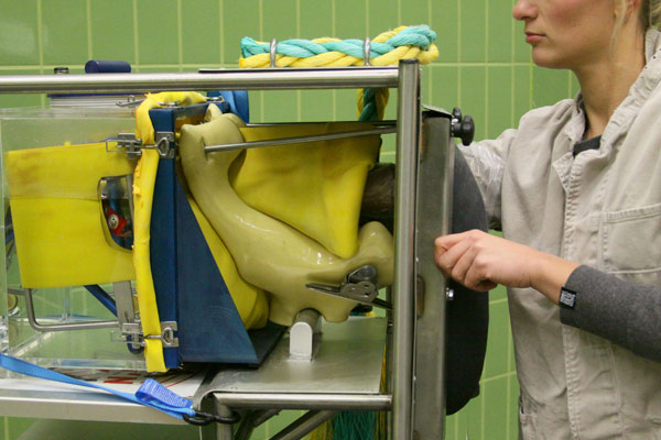 On the horse simulator students can practice gynaecological examinations.