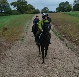 Shredded carpet is being used on the gallops at Leighton Farm, which is owned by the Potter Group.