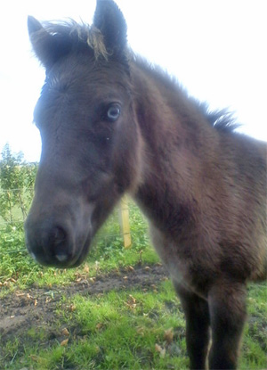 skyrian-pony3