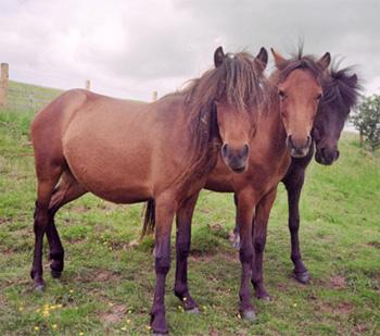 skyrian-pony5