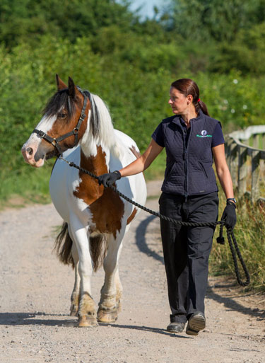 World Horse Welfare May was the model for the 'Invisible Horse Trail' at Badminton.