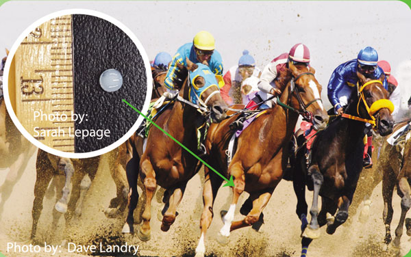 The equine cartilage disk is now a reality, with live testing on the horizon. Photos: Sarah Lepage; racing image, Dave Landry