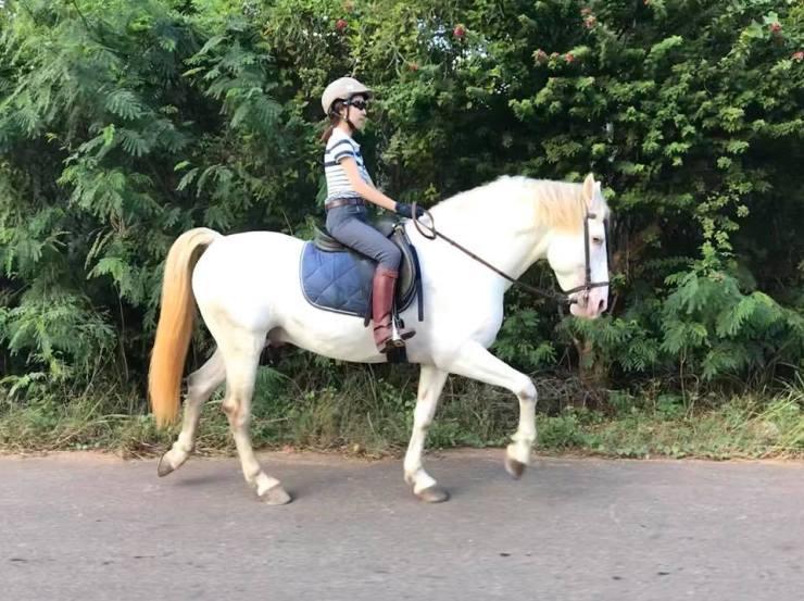 Horseback Riding Thailand Bangkok-Khaoyai