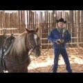 Driving Your Young Horse To Success with World Champion Horse Trainer, Cleve Wells