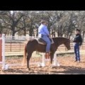 13. Competitive Edge Trail Tips: Enhance Your Performance With The Gate with World Champion Horse Trainer, Bruce Walquist