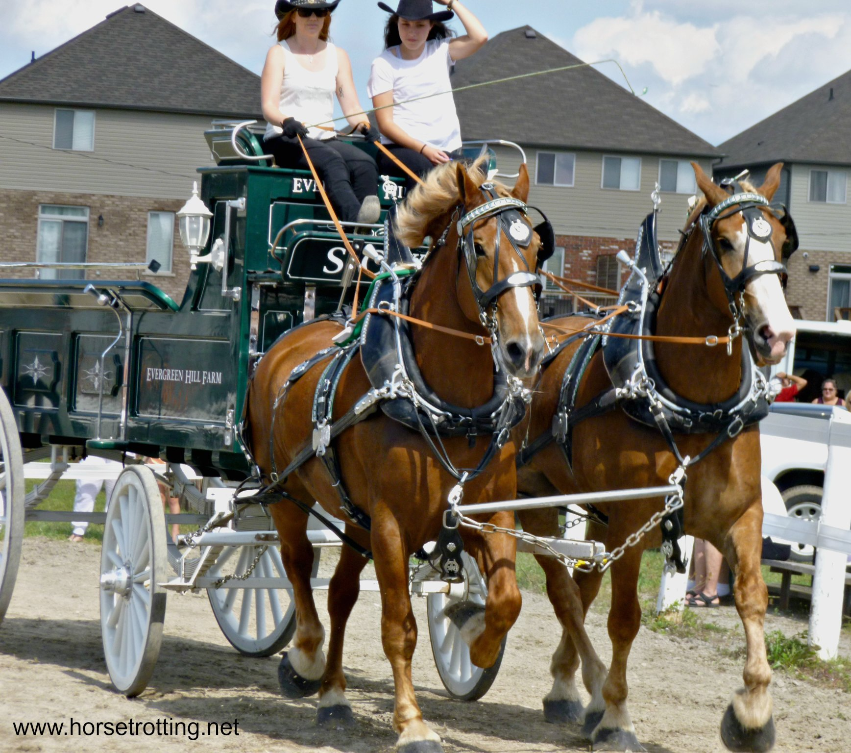 Heavy Horse Hitching – Fall Fair Competitions Demystified Part 1