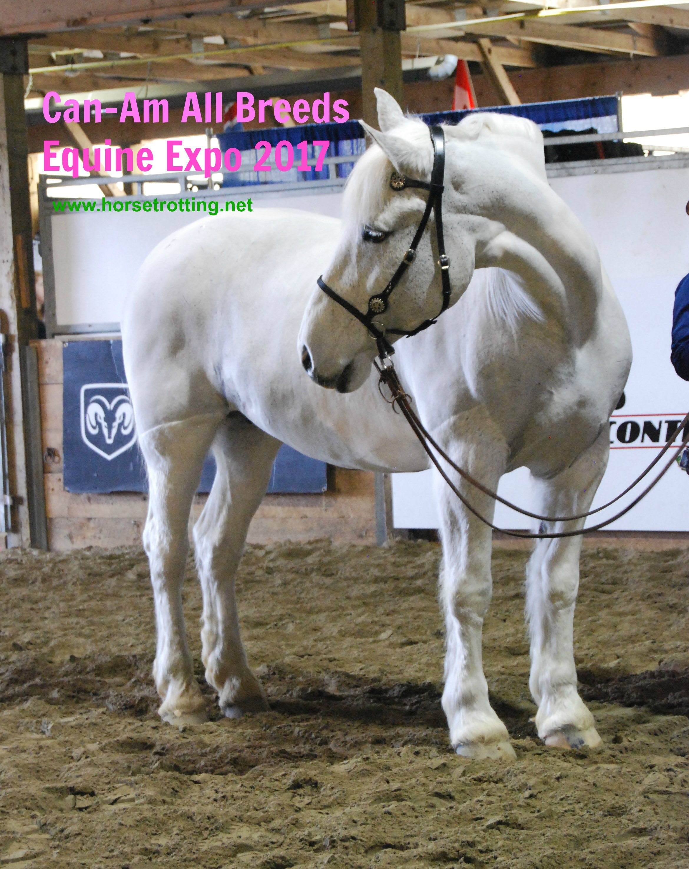 What's Happening in Markham? The Can-Am All Breeds Equine Expo 2017
