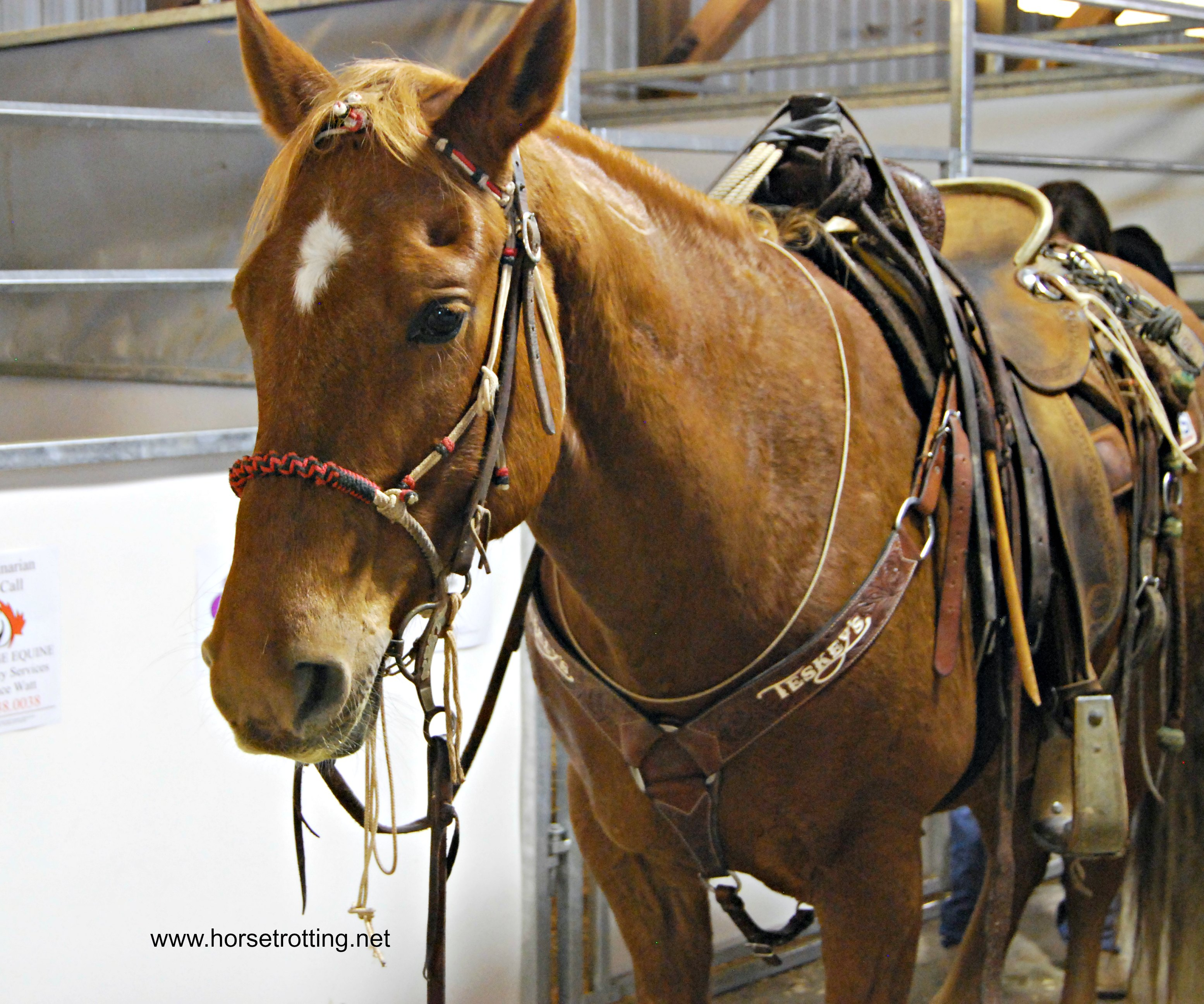 Fitting the Western Saddle or What we learned at Can-Am Equine Expo Part I