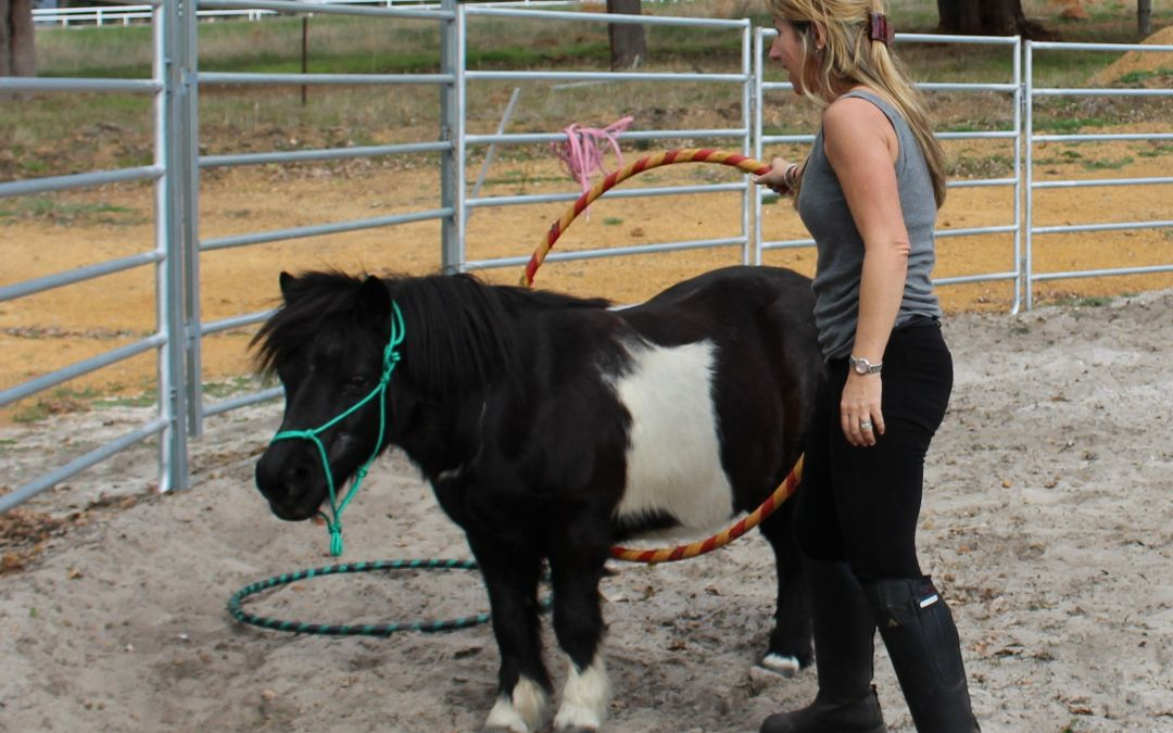Training Equine Assisted Learning/Therapy