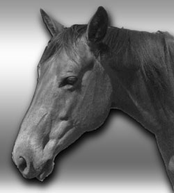Lily - beautiful horse