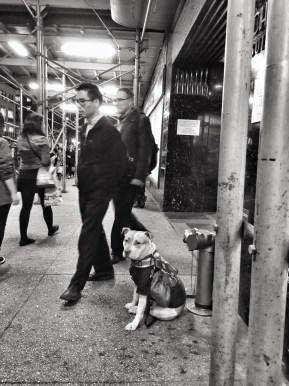 Street Photography - Emmy Horstkamp - 2015