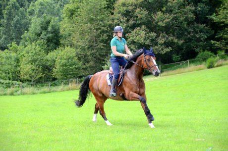 Essai horsecom