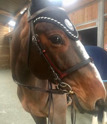 La muserolle confort + by In Horse We Trust