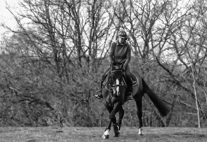 my horsecom