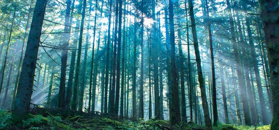 Je vois la vie en Vosges