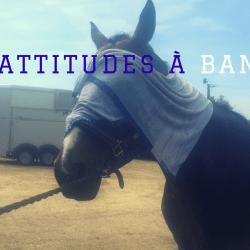 10 attitudes du cavalier à bannir
