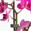 Orchid_OrchidLock