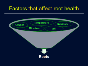Hydroponic root system health, Rosa Raudales, Univ. of Conn.