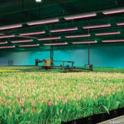 P-L-Light-systems-horti-LED-top-6