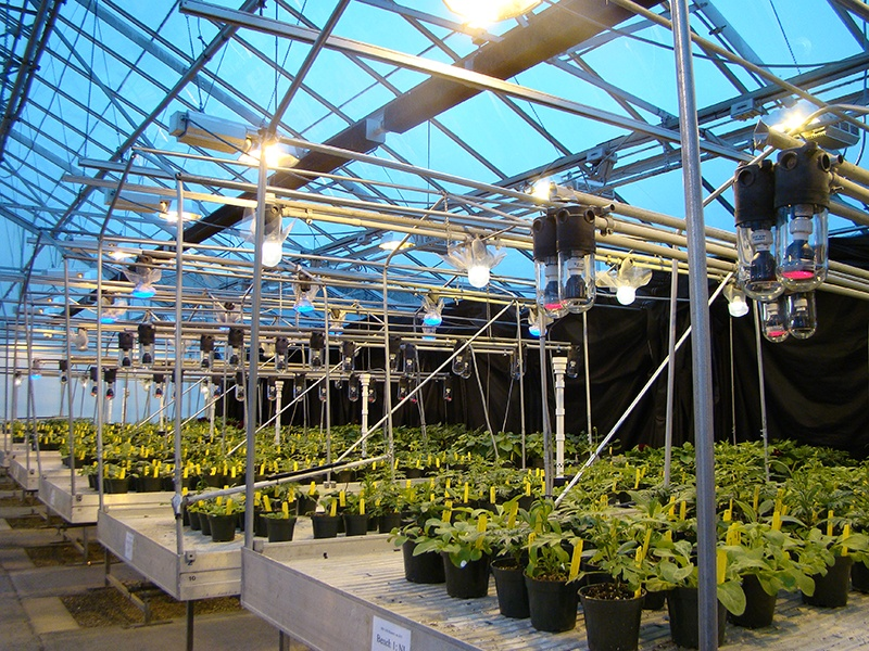 If red or far red are the predominant wavebands provided by LED lamps, 1-2 micromoles per square meter per second should be effective for speeding up the flowering of long-day crops.