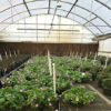 creekside-nursery-greenhouse